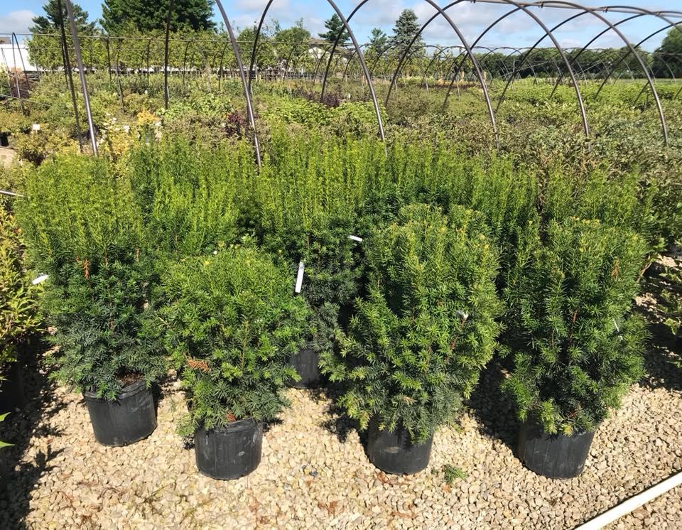 Shrubs Amp Perennials Kickapoo Creek Nursery