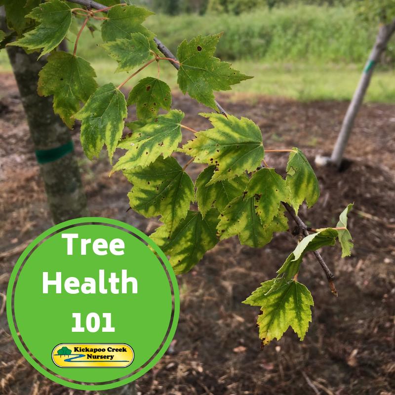 Tree Health 101