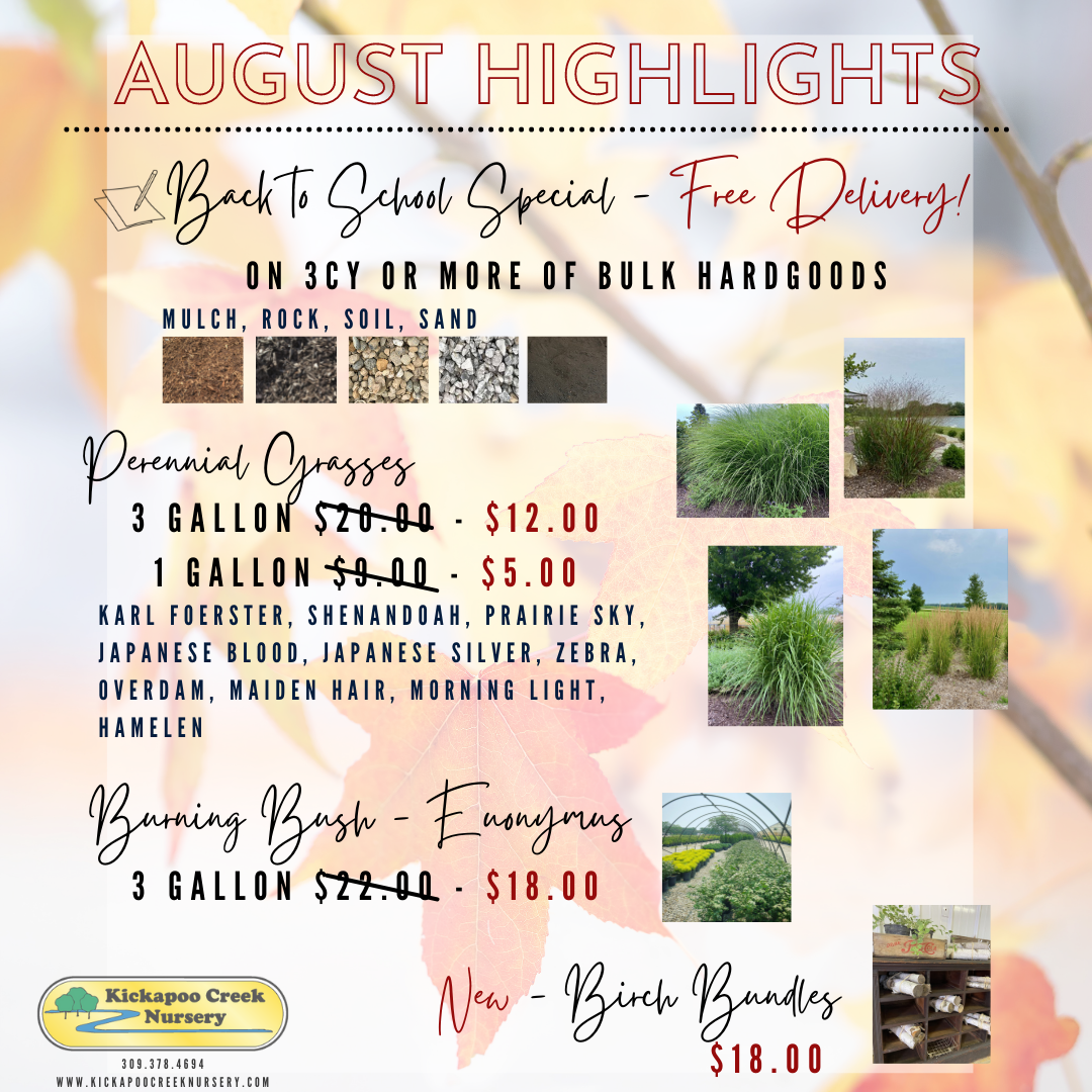 August Highlights 2021