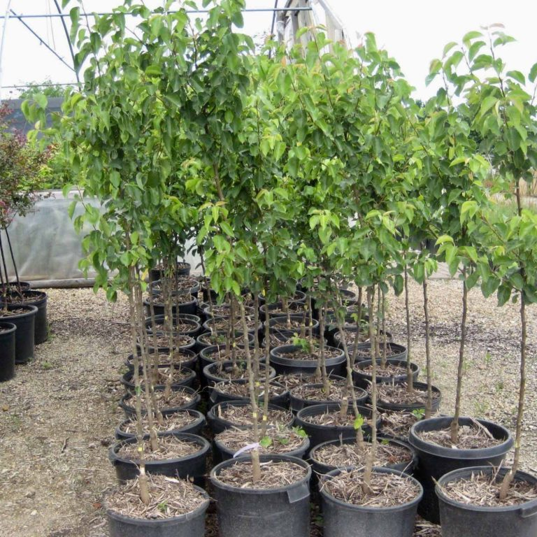 Kickapoo Creek Nursery (7)